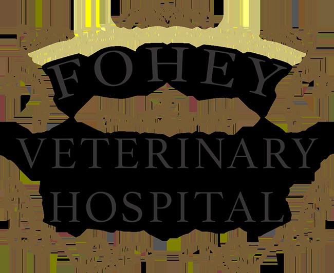 What Is My Dog Doing 5 Odd Dog Behaviors Fohey Veterinary Hospital